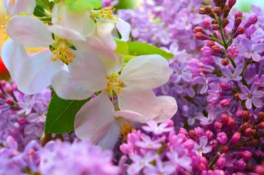 Бесплатные фото весна,цветение,цветы,сирень,яблоня,букет,флора,цветочная композиция
