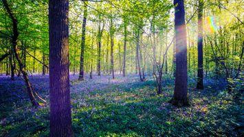 Лес и солнечные лучи