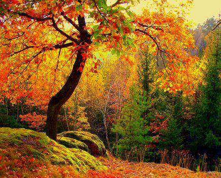 Фото бесплатно природа, осенние листья, осенний лес