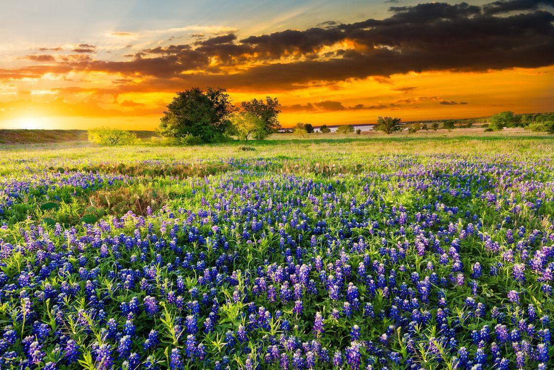 Фото бесплатно цветочное поле, люпин, поле - на рабочий стол