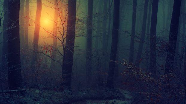 Photo free autumn, bark, dark