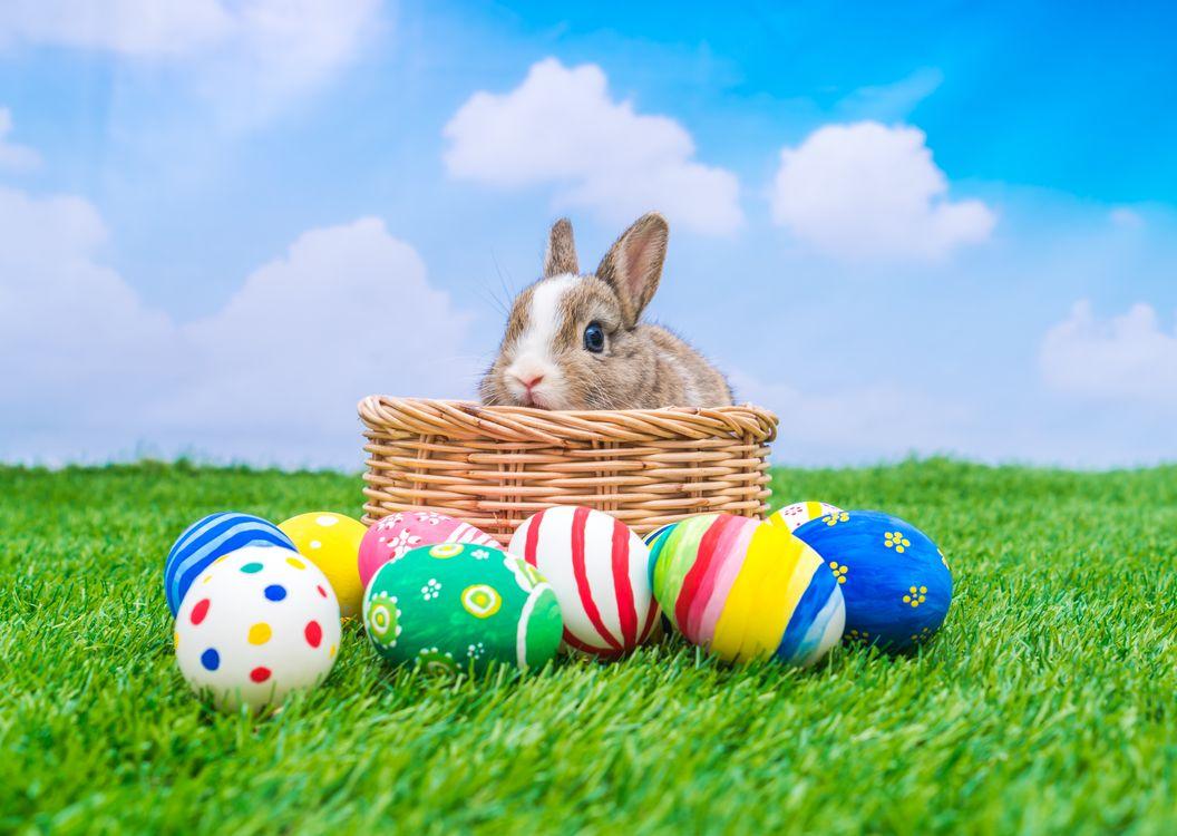 Фото бесплатно Христос Воскресе, христос воскрес, воистину воскрес, Пасха, пасхальные обои, пасхальные яйца, пасхальный кролик, праздники