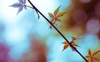 Фото бесплатно фотография, природа, растения, листья, ветка, глубина резкости