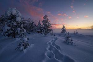 Бесплатные фото Ringerike,Norway,закат,зима,снег,следы,деревья
