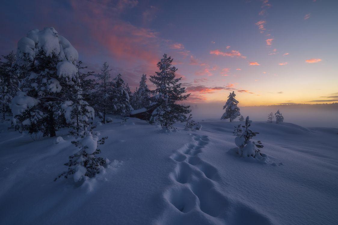 Фото бесплатно Ringerike, Norway, закат, зима, снег, следы, деревья, сугробы, пейзаж, пейзажи