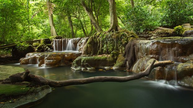 Photo free Thailand, Krabi, forest