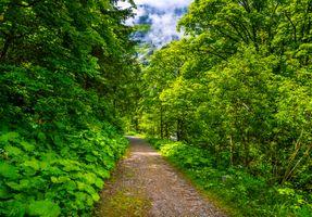 Заставки Бад-Гаштайн,Австрия,Bad Gastein лес,дорога,деревья,природа,пейзаж