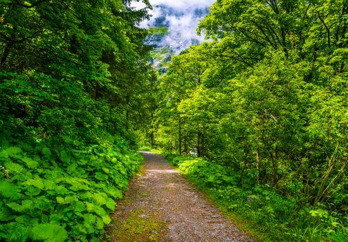 Photo free Austria Bad Gastein forest, Bad Gastein, trees