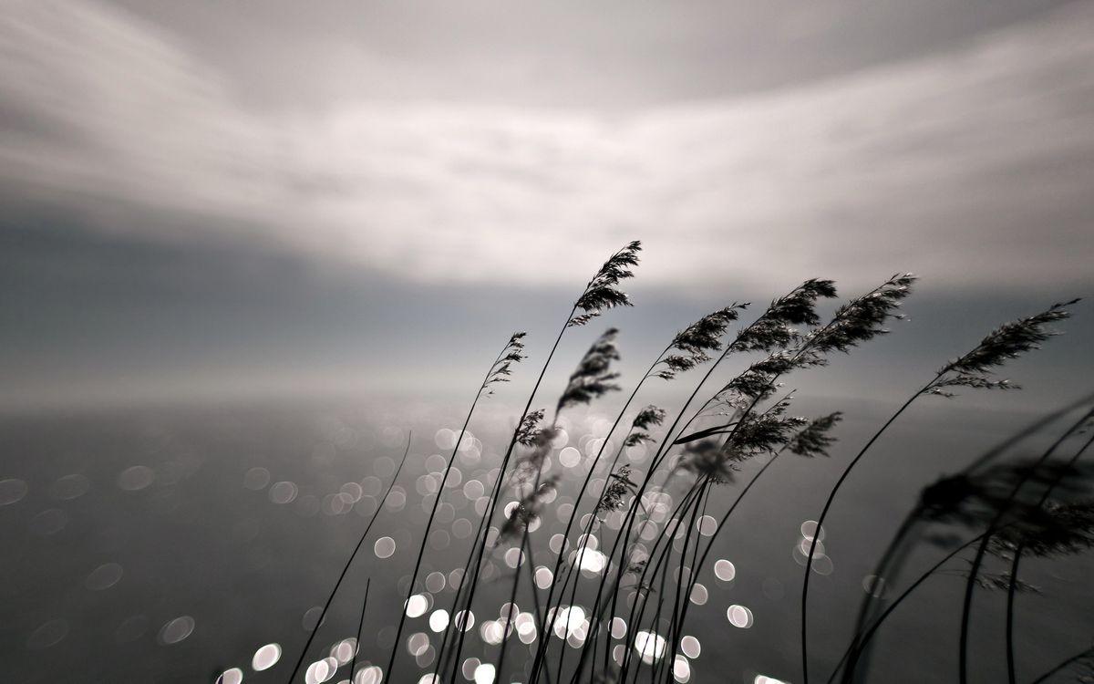 Фото бесплатно боке, трава, природа - на рабочий стол