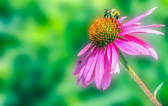 Заставки Флора, цветок цветочный, макрос