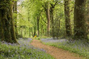 Заставки деревья, путь, природа