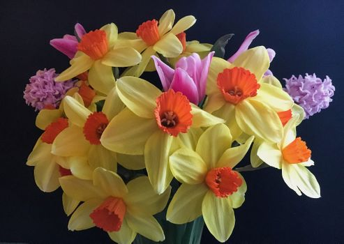 Фото бесплатно Нарциссы, букет, цветы