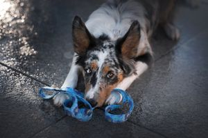 Собака на тротуарной плитке
