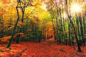 Фото бесплатно дорога, осенние листья, золотая осень