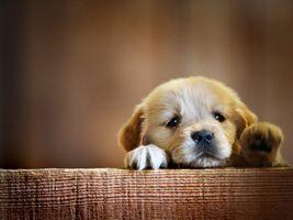 Фото бесплатно красивый, щенок, собака