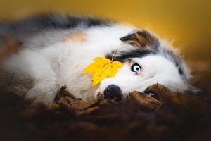 Желтый листок, голубые глаза