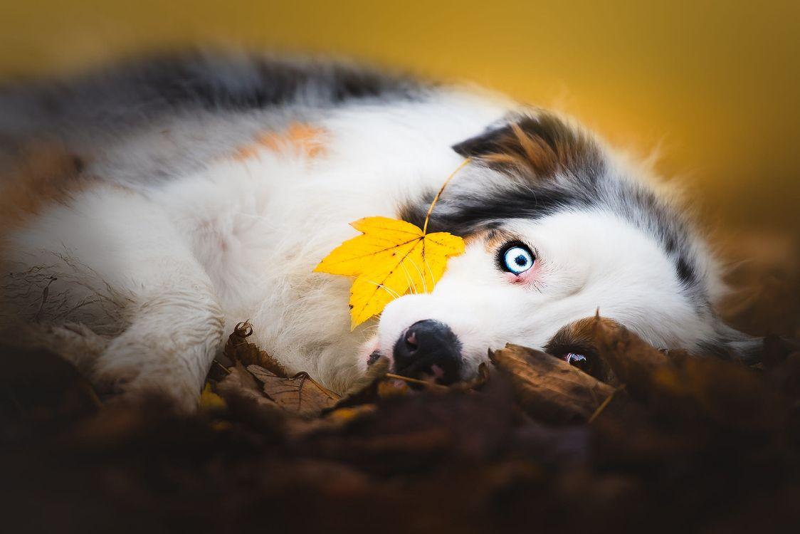Желтый листок, голубые глаза · бесплатная заставка
