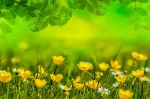 Фото бесплатно цветы, ветки деревьев, листья
