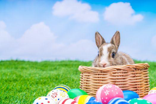 Photo free Easter, verily risen, Easter bunny