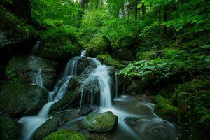 Бесплатные фото лес,деревья,водопад,камни,мох,поток,зелёный