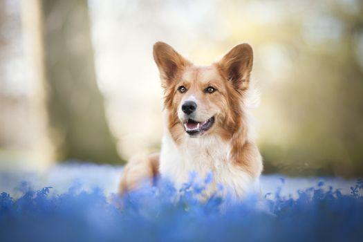 Собака на весенней полянке · бесплатное фото