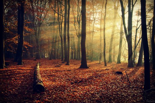 Заставки лес, солнечные лучи, времена года