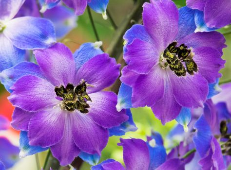 Яркий фон из цветов · бесплатное фото