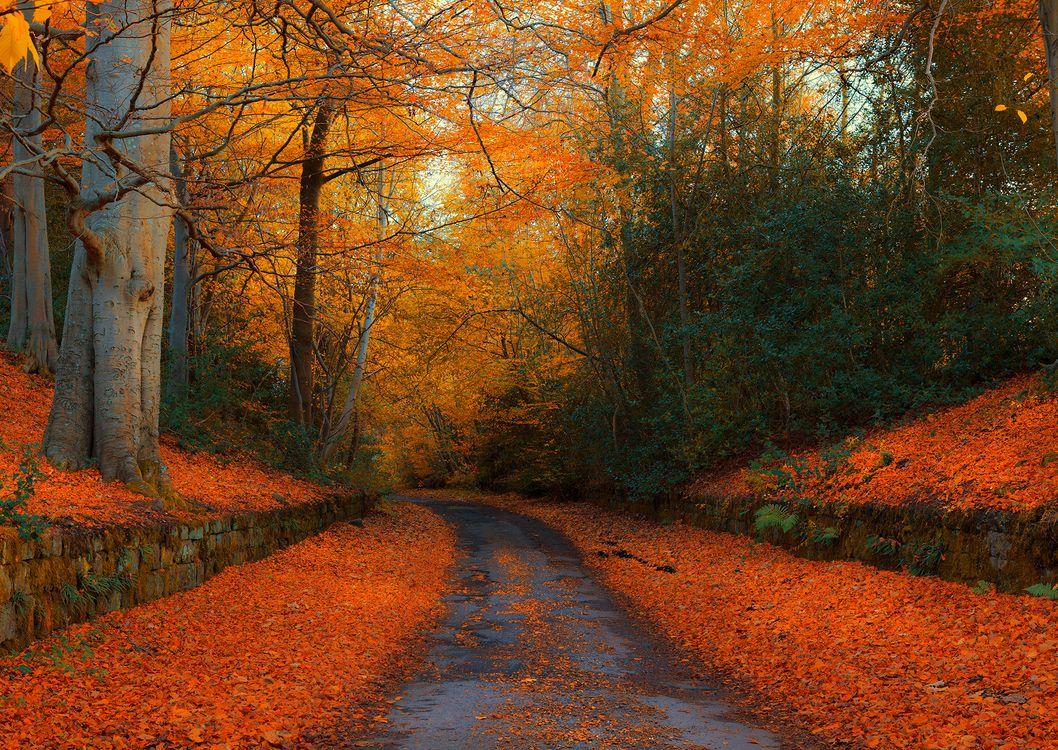 Обои осень, дорога, парк, лес, деревья, осенние листья, осенние краски, природа, пейзаж на телефон | картинки пейзажи - скачать