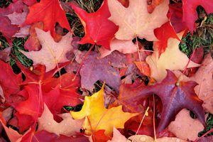 Фото бесплатно осень, осенние листья, осенние краски, краски осени, природа