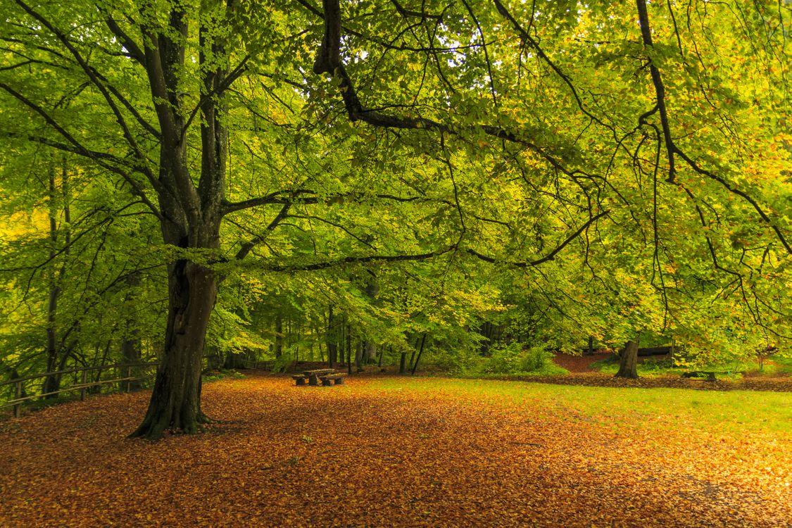 Осенний парк · бесплатное фото