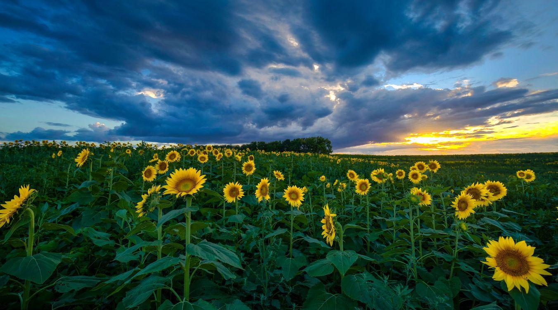 Обои поле, летний пейзаж, красивое небо картинки на телефон