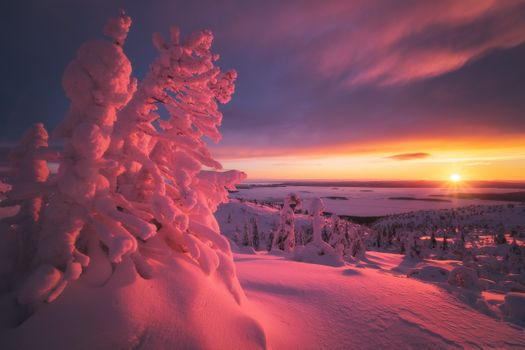 Pink sunset in the Arctic · free photo