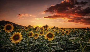 Фото бесплатно поле, флора, природа