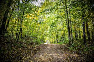 Фото бесплатно осень, лес, пейзаж