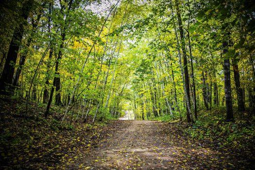 Заставки ранняя осень, лес, пейзаж