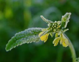 Фото бесплатно Осень, Мороз, цветок