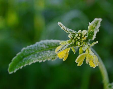 Бесплатные фото Осень,Мороз,цветок,иней