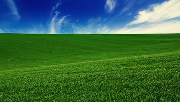 Фото бесплатно поле, трава, газон