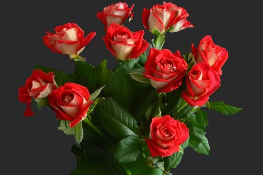 Заставка цветок, розы на рабочий стол бесплатно