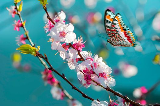 Photo free spring, butterfly, macro