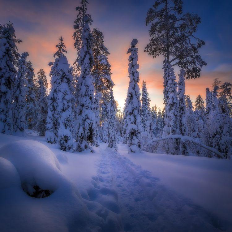 Фото бесплатно Финляндия, зима, снег, лес, деревья, дорога, закат, пейзаж, пейзажи