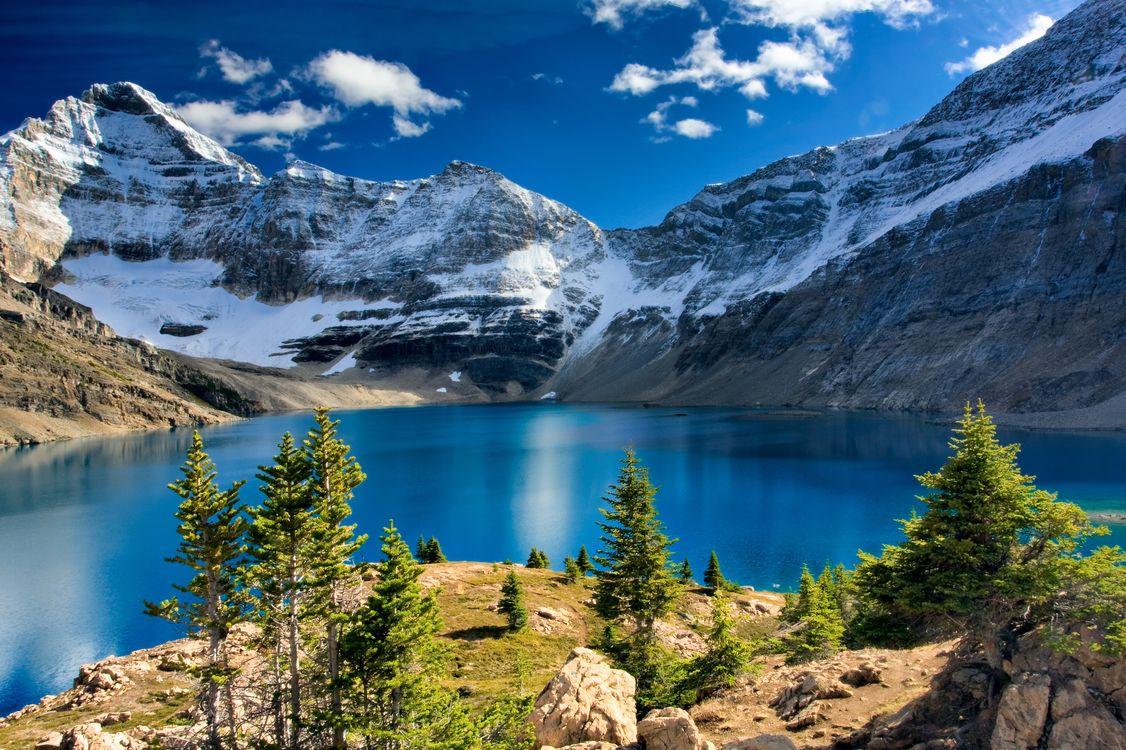 Обои туман, горные озера, елки картинки на телефон