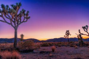 Бесплатные фото Национальный парк Джошуа-Три,Калифорния,дерево джошуа,горы,Joshua Tree National Park,пейзаж,закат