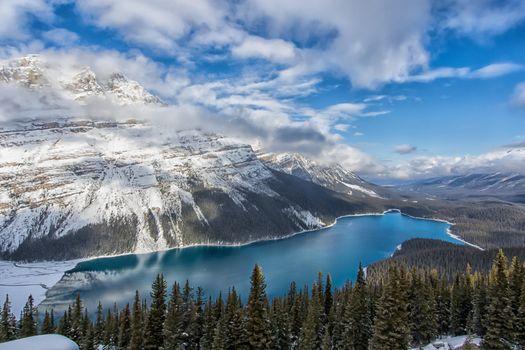 Фото бесплатно Канада, Альберта, лес