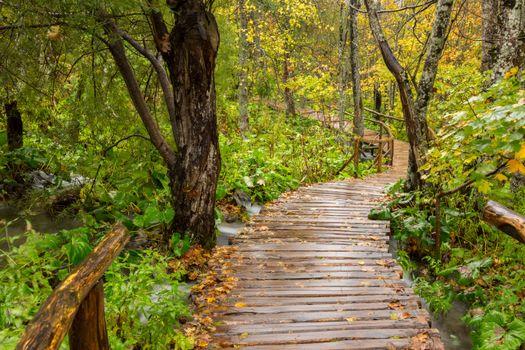 Фото бесплатно Плитвицкие озера, Хорватия, лес