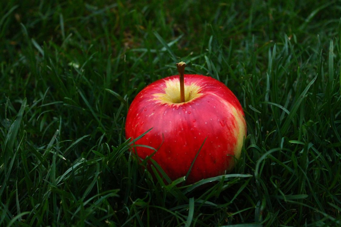 Яблоко на траве · бесплатное фото