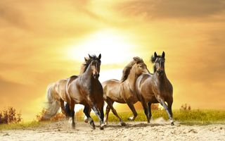 Photo free horses, sunset, black horse