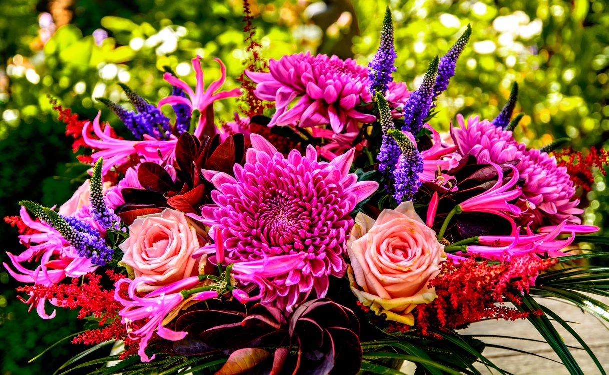 Цветы лета · бесплатное фото