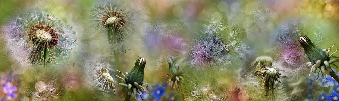 Фото бесплатно макро, цветы, панорама