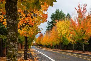 Осенняя дорога и листопад